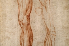V0007716 The muscles of the left leg, seen from the front, and the boCredit: Wellcome Library, London. Wellcome Imagesimages@wellcome.ac.ukhttp://images.wellcome.ac.ukThe muscles of the left leg, seen from the front, and the bones and muscles of the right leg seen in right profile, and between them, a patella. Drawing by Michelangelo Buonarotti, c. 1515-1520.By: Michelangelo BuonarrotiPublished:  - Copyrighted work available under Creative Commons by-nc 2.0 UK, see http://images.wellcome.ac.uk/indexplus/page/Prices.html